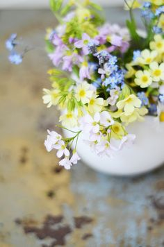 Spring flowers: primula elatior (oxlip) and forget-me-not
