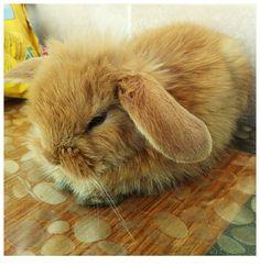 CİCOZ rabbit - bunny -ilovemybunny - bunniesworldwide - petrabbit - bunnylove -pets