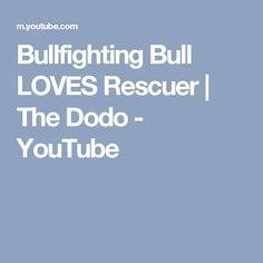 Bullfighting Bull LOVES Rescuer | The Dodo - YouTube