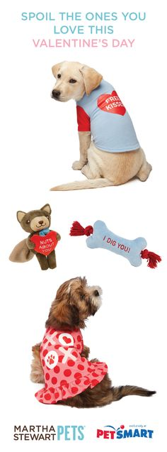 Valentine S Day Toys R Us : Pet treats toys r us and dog on pinterest