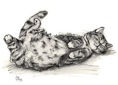 Cat Charcoal Print Funny Cat by Alisa Wilcher by AlisaPaints, $24.00