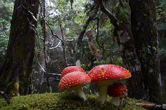 Bushwalk Australia • View topic - Fungi