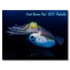 This beautiful postcard shows a cuttlefish displaying a variety of colors. The photo was taken during a dive on Australia's Great Barrier Reef. Customize by entering your text. #coral #reef #ocean #sea #diver #tropicalfish #greatbarrierreef #coralsea #coralreef #cuttlefish