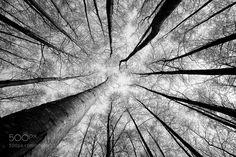 Climb to the sky - Pinned by Mak Khalaf Nature TampereFinlandPispalaPyynikkiautumnb&wbranchcrownfallforestmonochromenaturenature photographnature photographynature picstreetrees by TuomasV_