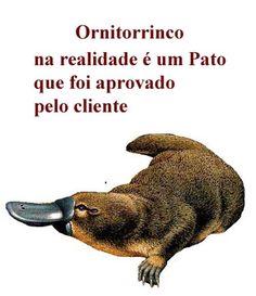 Ornitorrico, na verdade, é um pato...