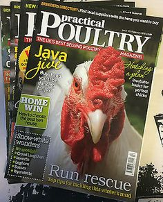 Practical Poultry Magazine-Chicken-Ducks-Game-Goose-Quail-Rabbits-#133-136-2015 Pet Supplies:Poultry & Waterfowl #forcharity