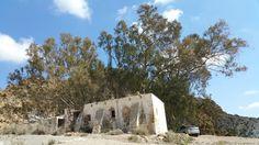 Viejo eucalipto