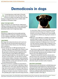 Veterinary client handout: Demodicosis in dogs - Download this PDF to distribute to pet owners in your veterinary practice - dvm360