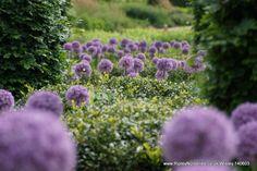 Wisley RHS June 2014 - Photo albums - Ripley Nurseries - Garden Centre - Farm Shop - Guildford - Surrey