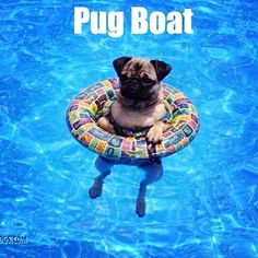 I'm not even kidding that we need one of these for the pugs at my pool, Funny Dogs, Funny Animals, Cute Animals, Pug Love, I Love Dogs, Amor Pug, Pugs And Kisses, Cute Pugs, Tier Fotos