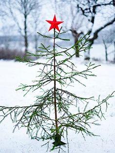 Charlie Brown tree - for Karol :)