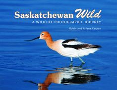 Saskatchewan Wild is a personal photographic journey, a taste of the many wildlife adventures possible in Saskatchewan. It is both a celebration of our wild creatures and wild places, and a reminder of what we might lose if we're not careful. Geography Of Canada, Physical Geography, Wild Creatures, Book Publishing, Social Studies, Bald Eagle, Robin, Wildlife, Journey