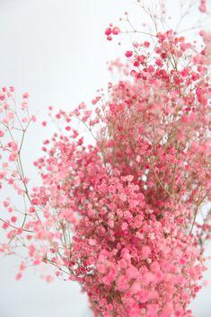 6284D94D-BF64-49AB-B8E8-E18EAE0F0F57 Gypsophila, Flowers, Red, Pink, Lavender, Nice Asses, Babies Breath, Royal Icing Flowers, Pink Hair