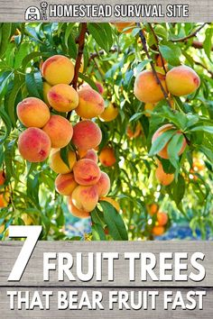 Most fruit trees take a long time to start bearing fruit, but there are some varieties that will give you fruit in just a few years. Veg Garden, Fruit Garden, Lawn And Garden, Garden Plants, Gardening Hacks, Garden Trees, Vegetable Gardening, Container Gardening, Growing Fruit Trees