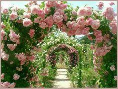 100 Bilder zur Gartengestaltung – die Kunst die Natur zu modellieren - magischer garten mit kletterpflanzen