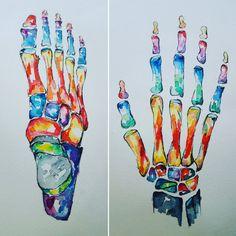 Watercolour Anatomy Art- Hand and Foot SET