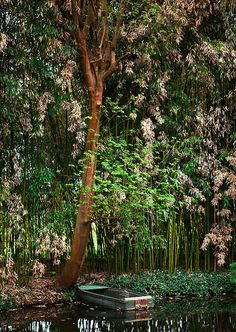 Giverny - Monet's house and gardens. France by KP!!!, via Flickr