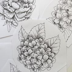 Black And White Hydrangea Sketch Love This For A Tattoo