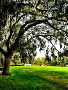 Forsyth Park, Savannah, Georgia. Two blocks away from our new house!!
