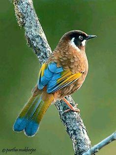 78ea29ccefbaf2ee148aa63b30a8b690--pretty-birds-beautiful-birds.jpg (540×720)