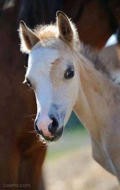 Little foal peeking. Adorable little face!
