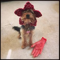 Things party The Demogorgon dog hat. Demodog from Stranger Things. Choose your size Excited to share the latest addition to my shop: The Demogorgon dog hat. Demodog from Stranger Things. Choose your size. Animal Costumes For Kids, Halloween Costumes For Teens, Halloween Pics, Halloween 2019, Halloween Party, Disfraces Stranger Things, Demogorgon Costume, Dog Onesies, Toddler Girl Halloween