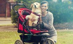 Dé Hondenhok Gids Voor Het Perfecte Hondenhok  https://www.dehondenwereld.nl/hondenhok-gids-voor-perfecte-hondenhok/