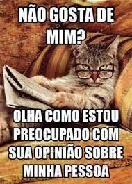 Shared by Catarina Aleluia. Funny Cats, Funny Jokes, Funny Animals, Avakin Life, Cat Memes, Comic Strips, Comedy, Anime, We Heart It