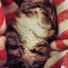 sweet dreams <3