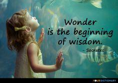 Wonder is the beginning of wisdom. - Socrates Quote