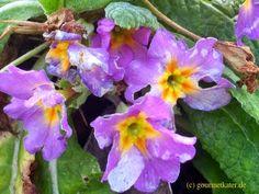 Gourmetkaters Garten: Kleine Farbtupfer im Winter #garten #gardening #flowers #winter