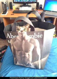 The cat's expression is gold.