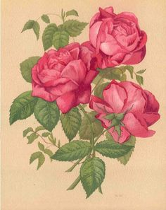 Francois Michelon, Le Livre D'Or des Roses (The Golden Book of Roses), Paris, 1885 chromolithograph botanical print by Paul Heriot