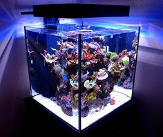 We just fell in love with this beautiful Solana 60 Gallon cube aquarium. This, incredibly clean reef tank, is very simply and beautifully aquascaped. Saltwater Aquarium Setup, Coral Reef Aquarium, Saltwater Fish Tanks, Aquarium Design, Marine Aquarium, Aquarium Fish Tank, Marine Fish Tanks, Marine Tank, Reef Aquascaping