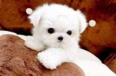 cute pups 6 These puppies are trying to melt your heart (45 pics)