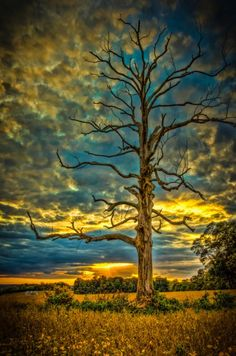 "It Insight Us • ""The Lonely Tree"" by bobbyb38"