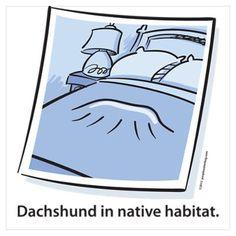 Dachshund Native Habitat Wall Art Poster