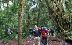 This image is of myself and one of my friends, Robbie Carter. We start our Kilimanjaro climb hiking through the rain forest.