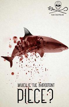 Sea Shepherd: Ocean's wings, 2