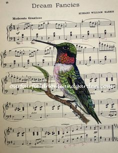 High quality print of a Ruby Throated Hummingbird watercolor painting on vintage sheet music by Barb Rosen* print is of bird and vintage sheet music onlyPrint size 8 1/2 in wide and 11 3/4 in tall. Fits a standard 8 X 10 mat or frame nicely.