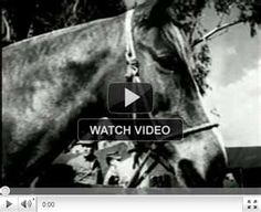 Sgt. Reckless - Korean War Horse