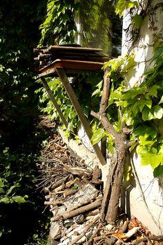 Az ablakgyíkvár és a talajszinti élőhelyek közötti összeköttetés biztosítására egy vastagabb ág tökéletesen megfelel (Fotó: Orbán Zoltán).
