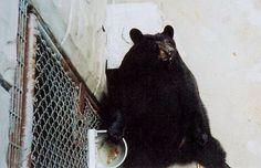 Stop Abusing the Cherokee Bears