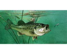 Largemouth Bass Giclee Art Print Canvas from original painting by Lawrence Dyer Wildlife Marine Art Trophy Bass Fish Commissions Available Bass Fishing Pictures, Largemouth Bass, Deep Sea Fishing, Wildlife Art, Canvas Prints, Art Prints, Canvas Art, Original Paintings, Fish Paintings