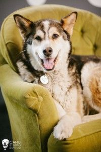Malamute! RIP Lucky, you were the best dog