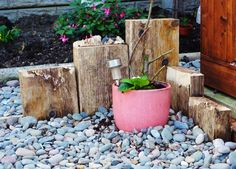 #2 CORNER FEATURE IN OUR BACK GARDEN MADE FROM DRIFTWOOD FROM OUR BEACH