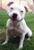 Animal smile - Yahoo!検索(画像)