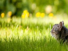 Gato expectante sobre la hierba