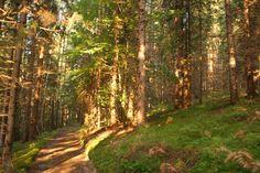 """Nordic Walking Tour in den heimischen Wäldern. Vom Naturhotel Faakersee starten Sie Ihre Tour Richtung Westen, entlang des See-Rundweges. Wenn Sie wieder auf die Hauptstraße kommen überqueren Sie diese und gehen entlang der Schotterstraße in den Wald. Bei der nächsten beschilderten Kreuzung haben Sie die Möglichkeit die Tour zur """"Hubertusquelle"""" fortzusetzen oder die etwas kürzere Variante Richtung """"Gesundheitsweg"""" zu wählen. Nordic Walking, Country Roads, Crushed Gravel, Woodland Forest, Vacation, Nature"""