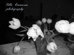 Tulppaani, tulipa, tulip